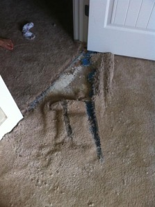 Carpet destroyed by dog