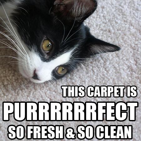 Purrrrfect