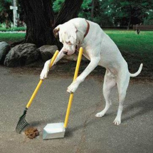 Sweeping Dog