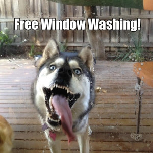 Free Window Washing