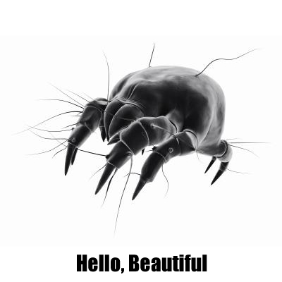 Beautiful Dust Mite