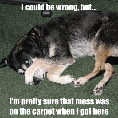 carpet mess